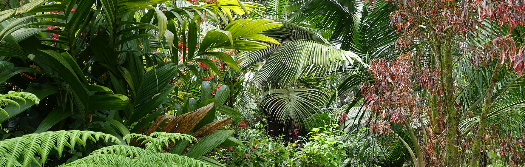 Kelley Orchidland Garden